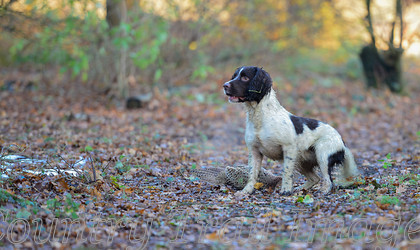 DSC8847 