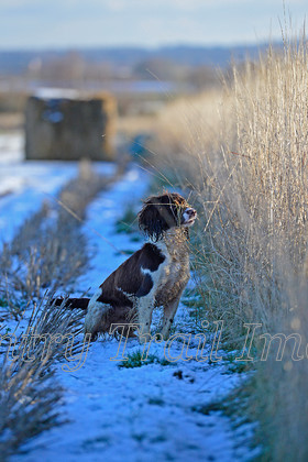 DSC8062 