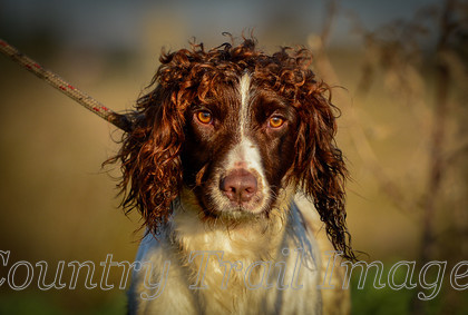 DSC8503 