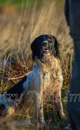 DSC8617 