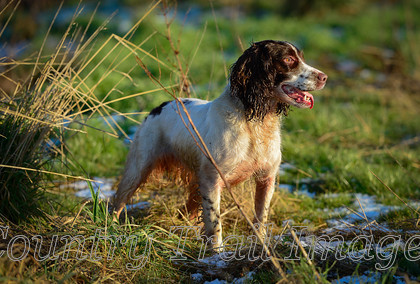 DSC8399 
