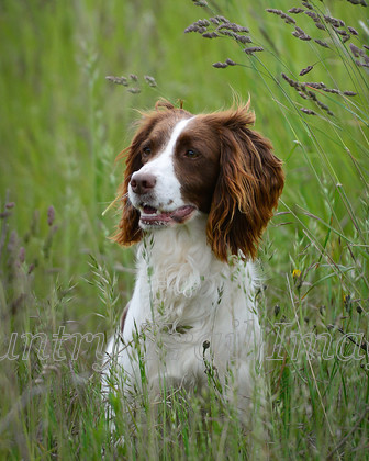 CTI7940-10x8 