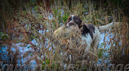 DSC8290 